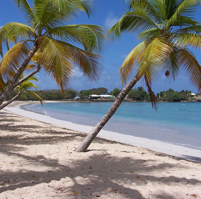 Où se loger pour ses prochaines vacances en Martinique ?
