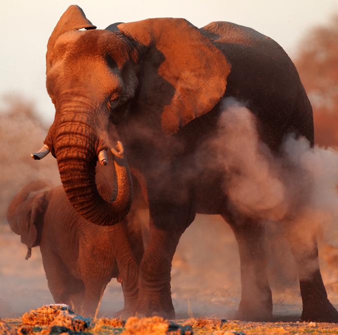 Safari bien-être en Tanzanie
